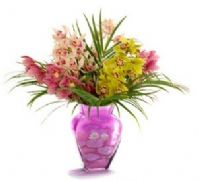 Orchid Delight in a vase